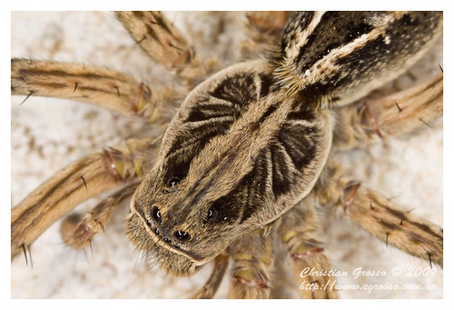 """Araña • <a style=""""font-size:0.8em;"""" href=""""http://www.flickr.com/photos/20681585@N05/4349828779/"""" target=""""_blank"""">View on Flickr</a>"""