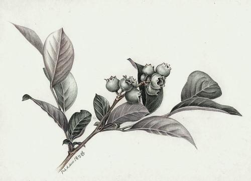 智勝_小藍莓