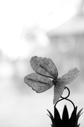 53/365 (Butterfly Wing)