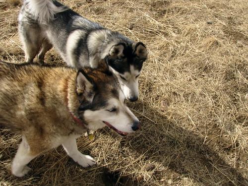 Kishka and friend