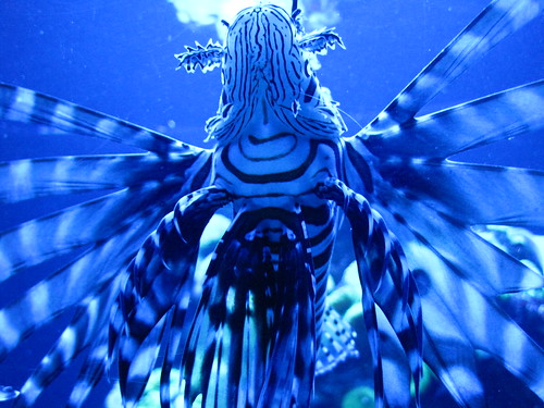 Lionfish angel