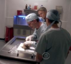 Palmer's autopsy