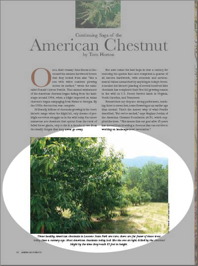 Picture in American Forests Magazine