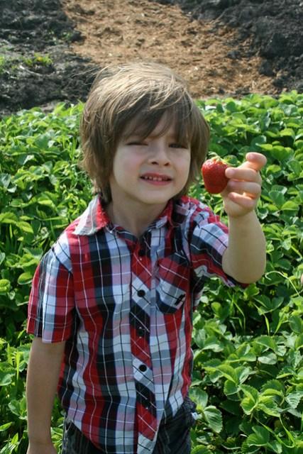 nehe_strawberries