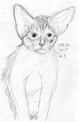 Cute kitten, drawn life on April 15, 2010 (sketch 1)