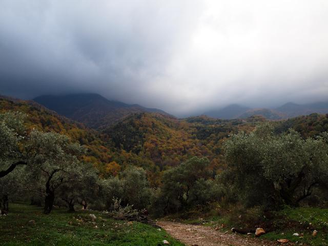 Furtună peste livada de măslini