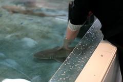 Touching a shark