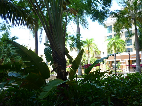 Under the trees, Condado