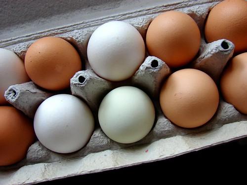 Zephyr Farm eggs