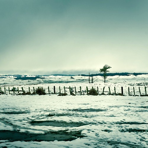Tree / Winter / Landscape por ►CubaGallery