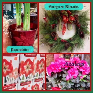 Holiday Flowers and Plants - Lafayette Florist & Greenhouses in Lafayette, Colo.
