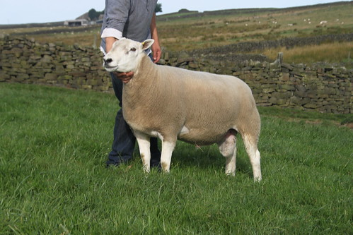 rams for sale 2013