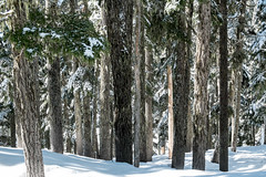 The forest in winter. Kendall Peak Lakes