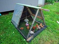 Chicken tractor at Alderleaf Wilderness College