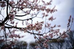 Bloomwave