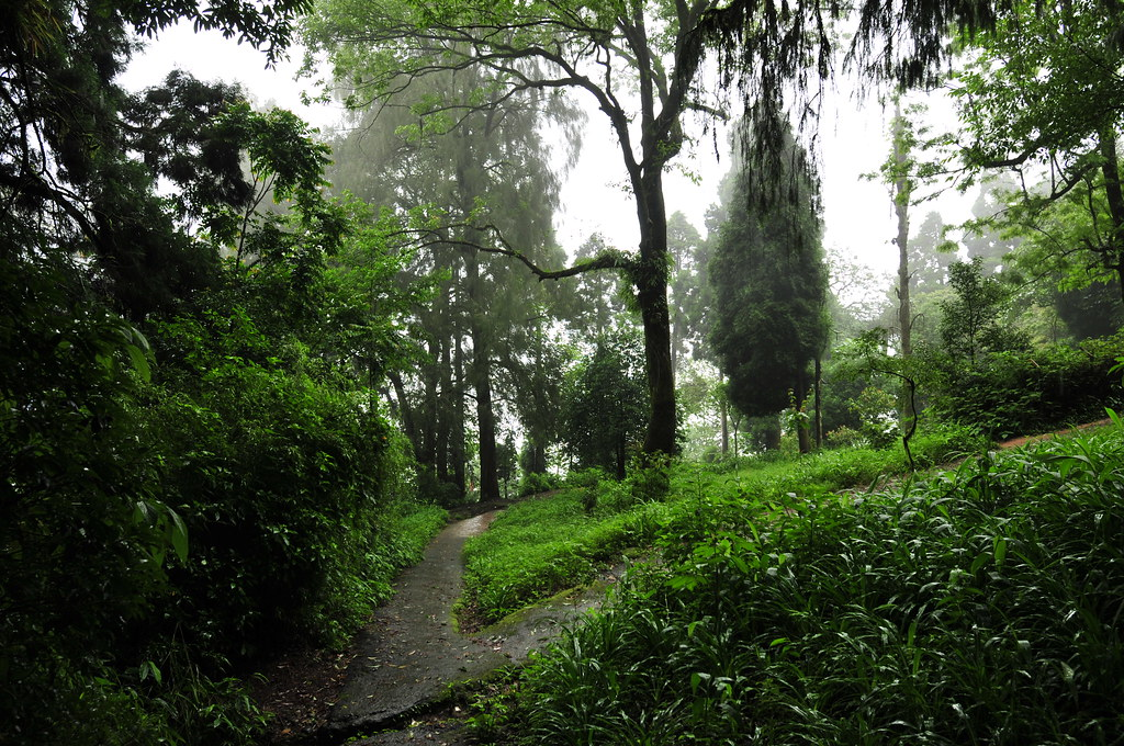 Day in Darjeeling