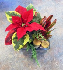 Poinsettia in Cube - Lisa Greene, AAF, AIFD, PFCI