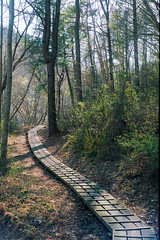 Kentucky Trail
