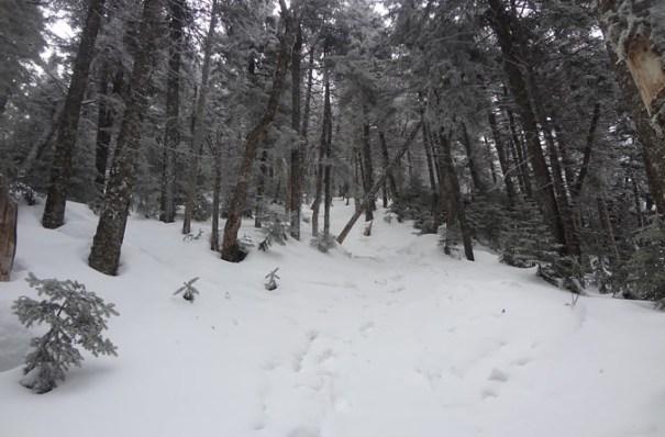 Winter Ammonoosuc Trail