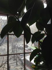 Window at 401 Richmond
