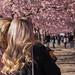 Street life under the cherry blossom