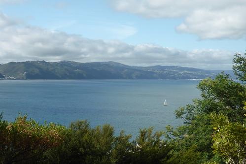 Blick über Wellington
