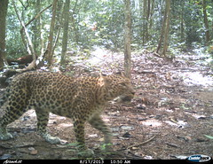 """leopard8 BK-14 • <a style=""""font-size:0.8em;"""" href=""""http://www.flickr.com/photos/109145777@N03/13794571085/"""" target=""""_blank"""">View on Flickr</a>"""