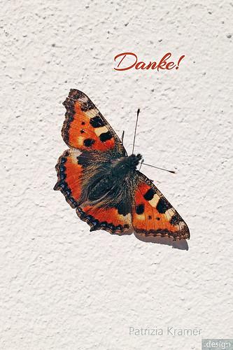 Schmetterling · Butterfly