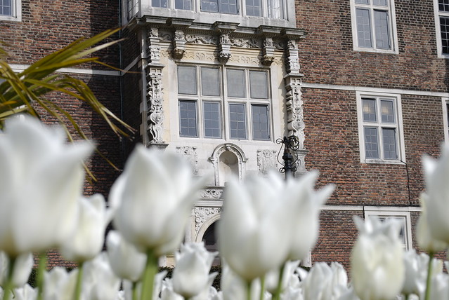 Charlton House flowers