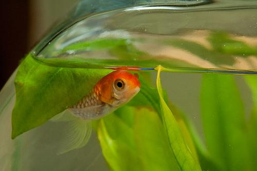 Snuggle fish
