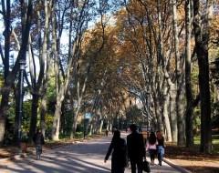 Park - Istambul