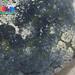 Cushion star (Culcita novaeguineae)