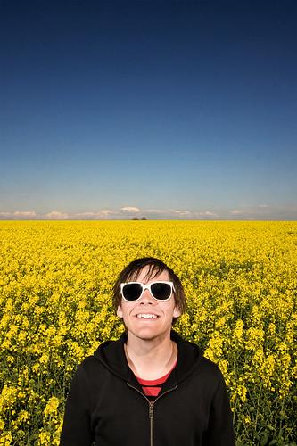 Robin in the fields