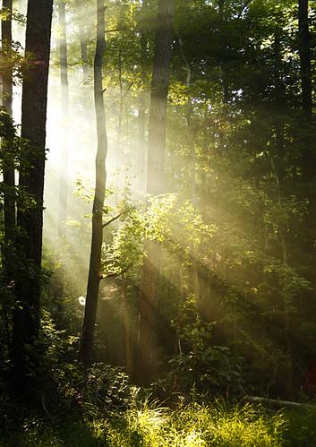 Morning Rays through trees