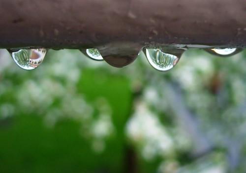 wet drip