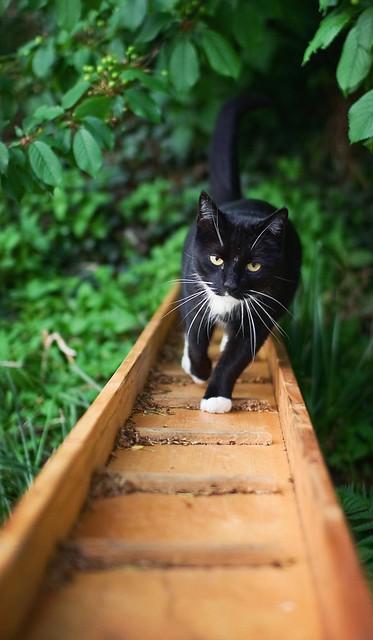 Climbing the kitty ladder.