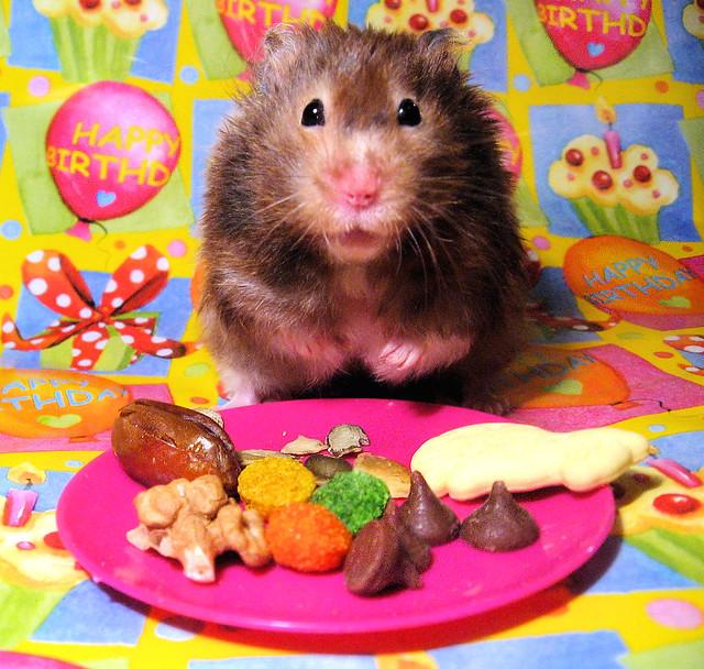 My Birthday Prayer, Szarotka & birthday treats