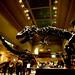 Dinosaur Hall T-Rex