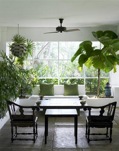 Plantas que purifican nuestro hogar