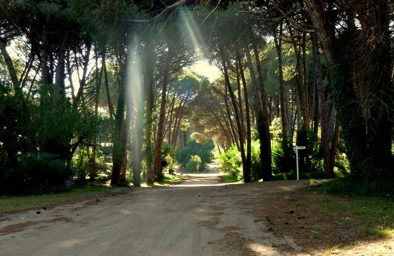 Los rayos y el camino