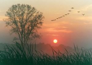 Autumn dawn from Flickr via Wylio
