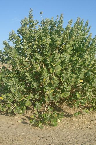 沙模植物1-3