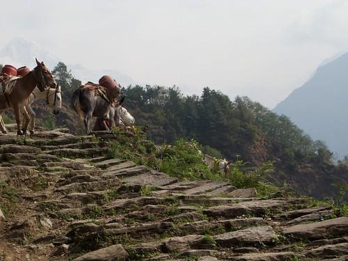 nepal 211