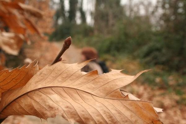 Una foglia tra tante | Flickr - Photo Sharing!
