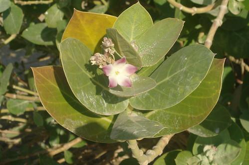沙模植物1-2