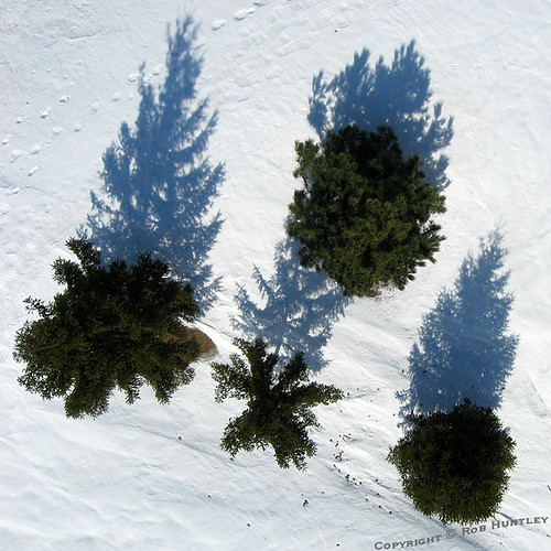 Tree Shadows - Kite Aerial Photography