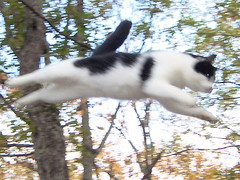Spooky, Flying Space-Cat