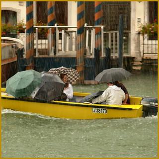 raining cats & dogs...