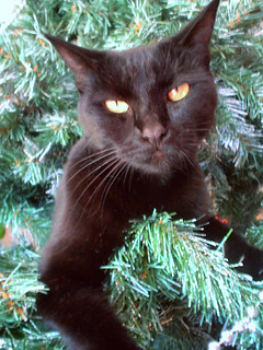 how to keep your christmas tree safe from your ch cats life with cerebellar hypoplasia cats. Black Bedroom Furniture Sets. Home Design Ideas