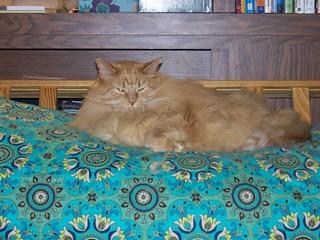 OJ smooshes the futon